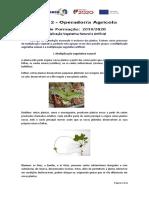 Multiplicação Vegetativa Natural e Artificial