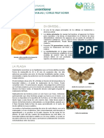 FCP_Ecdytolopha_aurantiana_ES_Rev00.pdf