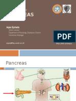 Endocrinology - Pankreas