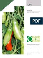 Il pomodoro - Partenocarpia del pomodoro e studio dei geni A