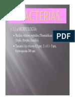 Moneras (II)