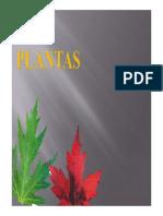 Plantas (III)
