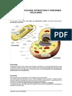 estructura y funciones celulares