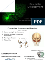 biol 459 cerebellum