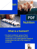 animalnutrition-121105132612-phpapp02
