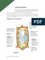 04.metabolismo_celular.pdf