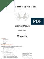 Neuro SCLesionsModule_v2