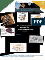 Revista psicofisiología