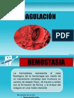 Coagulacion pato