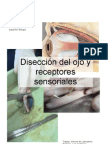 Diseccion Del Ojo(1)