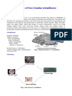 Biology_of_Koi_Anabas_testudineus.pdf