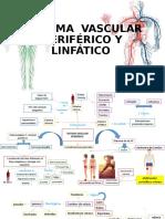 VASCULAR PERIFÉRICO Y LINFÁTICO FINAL. (1)