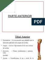 mùsculos parte anterior y lateral.pptx
