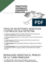 RECEPTORES SENSITIVOS, CIRCUITOS NEURONALES PARA EL PROCESAMIENTO