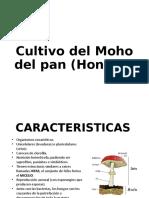 Cultivo del Moho del pan (Hongos).pptx