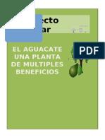 Proyectos escolares PLANTA DE AGUACATE.docx