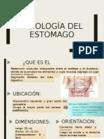 Fisiología del estomago 6-03-19