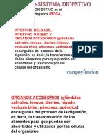 sistemadigestivo-100913222139-phpapp02