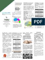Folleto-Del-Encefalo.pdf