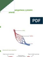 VASOS SANGUINEOS.pdf