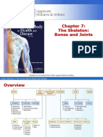 Chapter 7 The Skeleton Bones and Joints