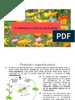 9.4 REPRODUCCIÓN DE LAS PLANTAS (1)