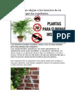 7 plantas que alejan a los insectos de tu casa mejor que los repelentes
