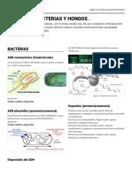 padlet-de estudio de virus y bacterias