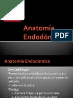 Anatomía Endodóntica P1
