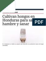 Cultivan hongos en Honduras para saciar el hambre y sanar | AméricaEconomía | AméricaEconomía