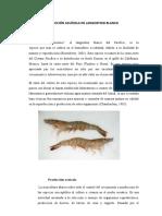 PRODUCCIÓN ACUÍCOLA DE LANGOSTINO BLANCO.docx Clase.docx