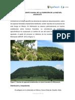 Armillaria spp. Dra. Michua