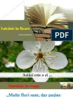 Salcami in floare  lectia 1