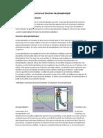 structure et fonction de phospholipid
