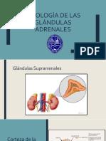Fisiologia glandulas adrenales