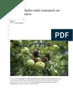 Enfermedades más comunes en los manzanos