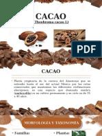 Cacao Expo 2019