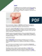 Definición de hígado