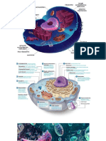cell and celluar organelles.pptx.pdf
