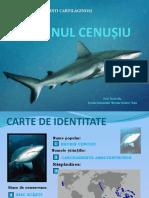 651-rechinul-cenuc899iu.ppsx