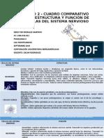 ACTIVIDAD 2 - CUADRO COMPARATIVO SOBRE LA ESTRUCTURA-DERLY.pptx