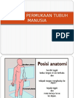 Anatomi Permukaan Tubuh Manusia