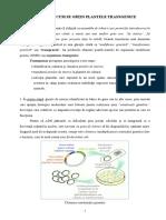Plante transgenice