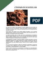 Anatomía y fisiología de la lombriz roja.docx