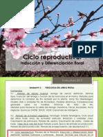 floracion.pdf