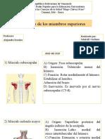 Músculos de los miembros superiores.pptx