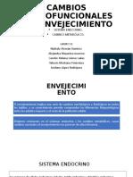 CAMBIOS MORFOFUNCIONALES DEL ENVEJECIMIENTO endocrino - copia