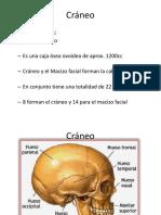 Anatomia 1er parcial