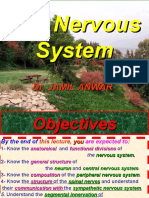 The Nervous System (Top)