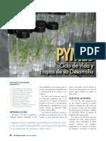 CICLO VIDA ORGANIZACIONES.pdf